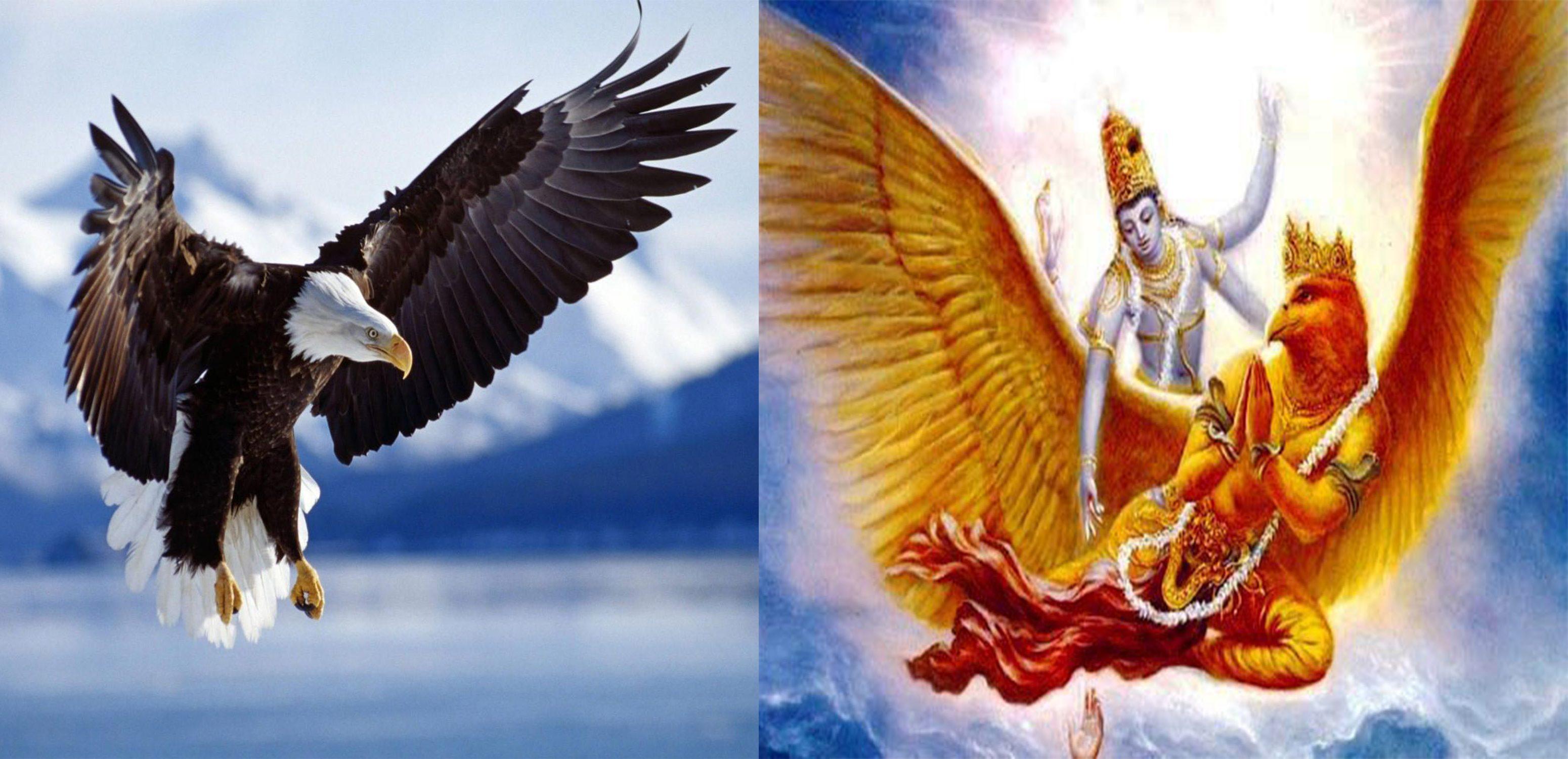 Garuda bird bhagalpur
